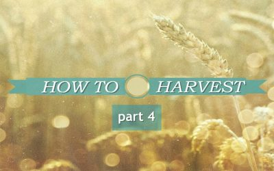 HOW TO HARVEST part 4 – Don't Miss The Opportunity