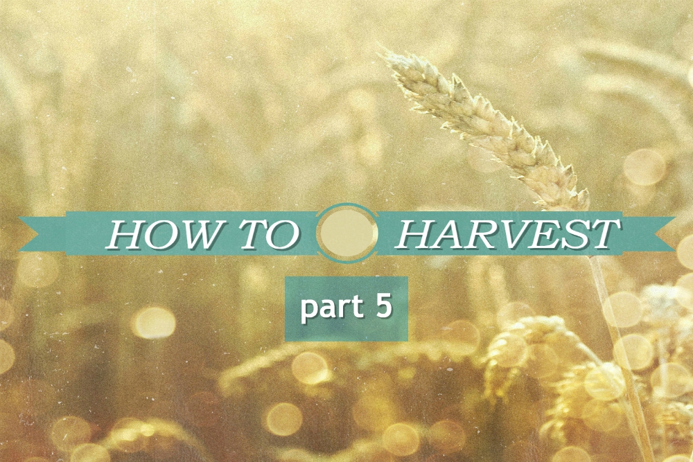 HOW TO HARVEST part 5 – Follow His Lead
