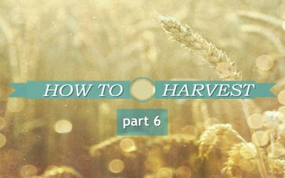 HOW TO HARVEST part 6 – Motivated To Be A Blessing
