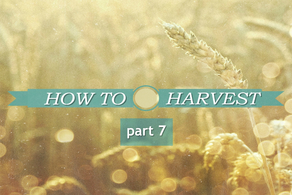 HOW TO HARVEST part 7 – What To Do While Waiting